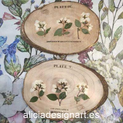 Cuadros con rodajas de madera natural decoradas con flores blancas - Taller decoración de muebles antiguos Madrid estilo Shabby Chic, Provenzal, Romántico, Nórdico
